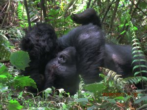 Bwindi Impenetrable Forest Park
