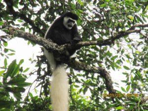 rwanda safari tour excursions