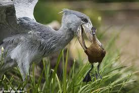 Bird Watching in Queen Elizabeth National Park