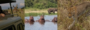 murchison-falls-wildlife