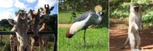 uganda-wildlife-education-center