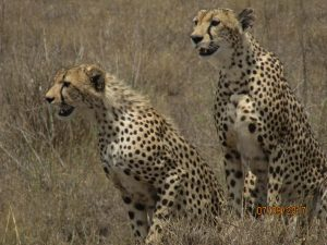 uganda wildlife safari tours