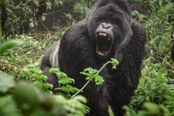 4 Days Uganda Gorilla Trekking Tour