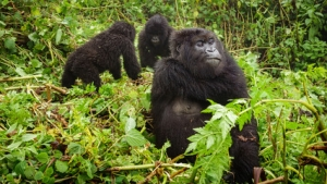 6 Days Uganda Wildlife Safari Kidepo Valley