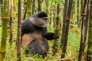 Birding in Mgahinga Gorilla Park Uganda